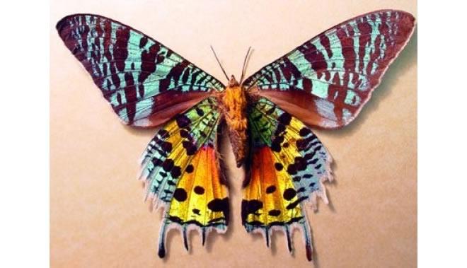 01-animail-mais-bonito-borboleta