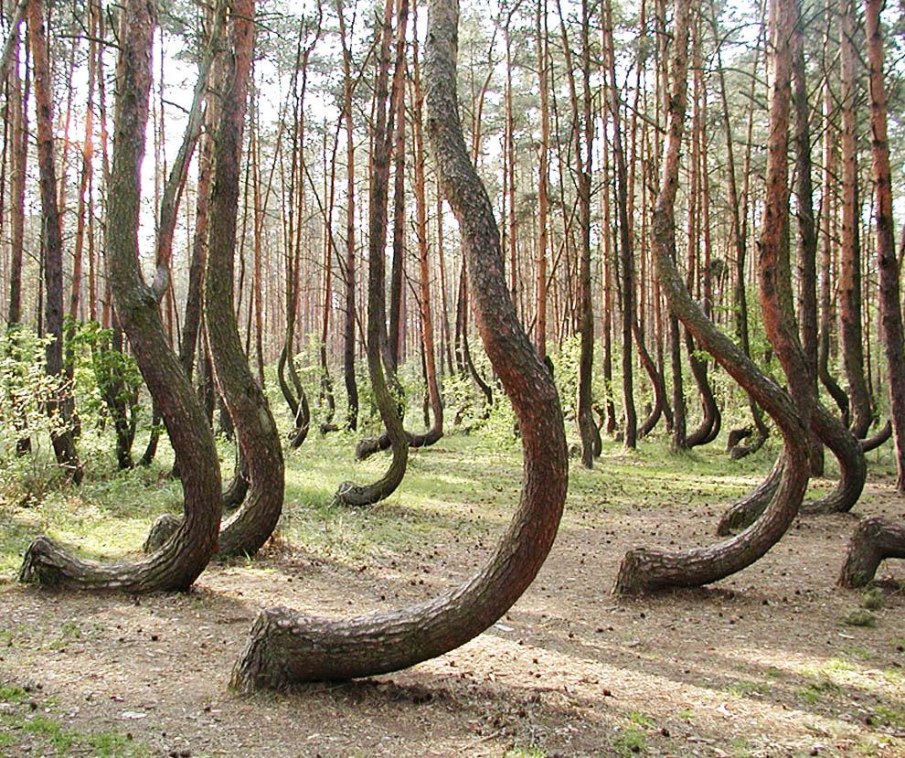 Hotel - Árvores mais bonitas da terra