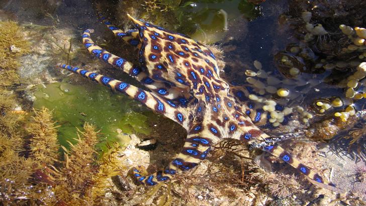 Criaturas marinhas venenosas