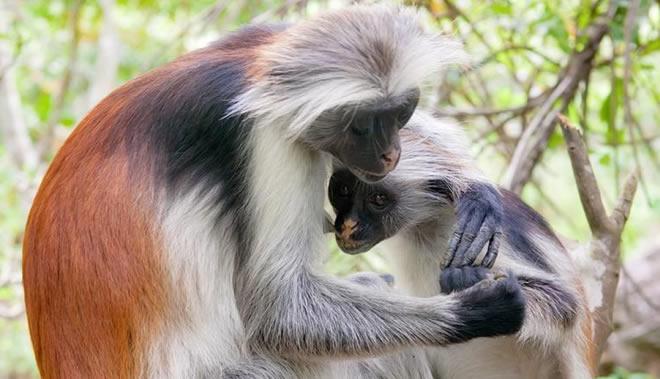 07-macaco-mais-bonito-do-mundo