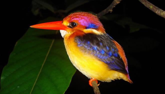 Muito Os 10 animais mais bonitos do mundo - Top 10 Melhores FL22