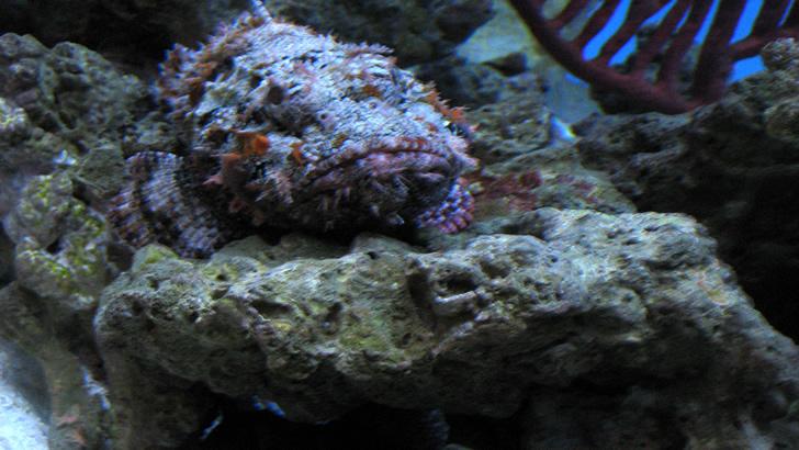 O peixe mais venenoso da terra