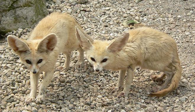09-raposa