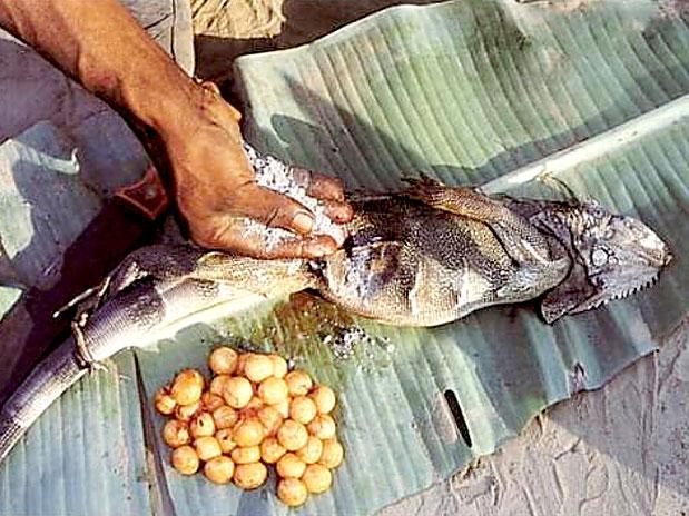 Comidas mais bizarras - Colimbia - Ovo de Lagarta